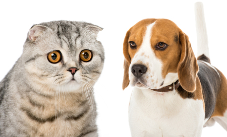 collage of cat and dog isolated on white