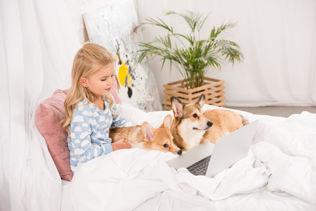 cute child lying in bed with corgi dogs and using laptop at home Archivio Fotografico - 116997654