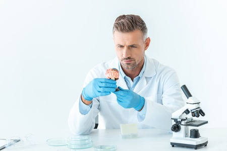 handsome scientist looking at brain model isolated on white Stock Photo