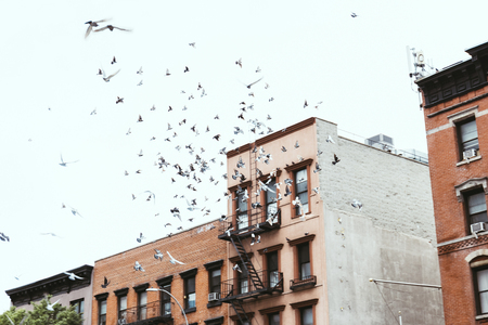 urban scene with birds flying over buidings in new york, usa Stock Photo
