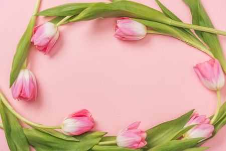 pink tulips arranged in oval on pink background with copy space 版權商用圖片