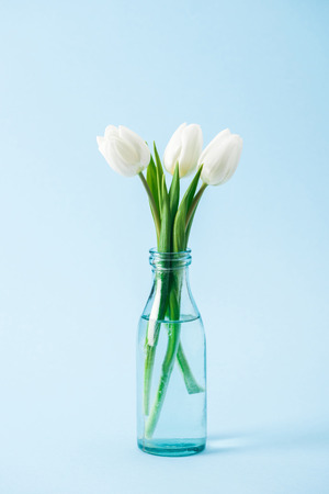 bouquet of white tulips in transparent glass vase on blue background Banco de Imagens