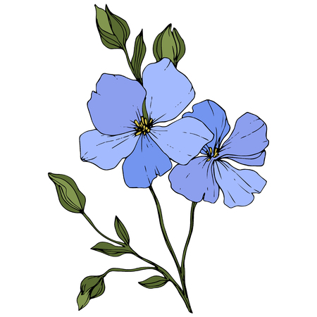 Vector. Blue flax. Floral botanical flower. Green spring leaf wildflower isolated. Engraved ink art. Isolated flax illustration element on white background.