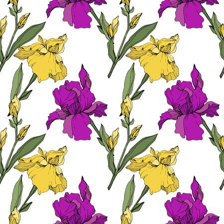 Wektor tęczówki fioletowy, żółty i niebieski. Kwiatowy kwiat botaniczny. Wildflower liść wiosna dzikiego na białym tle. Grawerowana sztuka tuszu. Bezszwowe tło wzór. Tkanina tapeta tekstura wydruku.