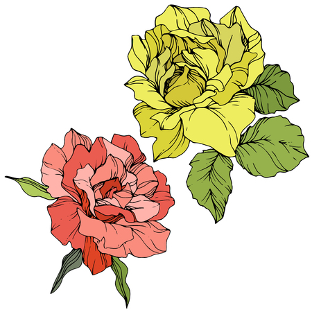 Vector Pink rose. Floral botanical flower. Green leaf. Isolated rose illustration element. Black and white engraved ink art. Illustration