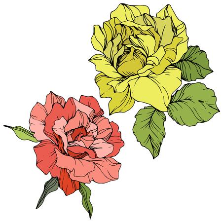 Vector Pink rose. Floral botanical flower. Green leaf. Isolated rose illustration element. Black and white engraved ink art. Archivio Fotografico - 125015095