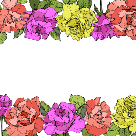 Vector Rose floral border. Floral botanical flower with green leaf. Purple, yellow and coral engraved ink art on white background.