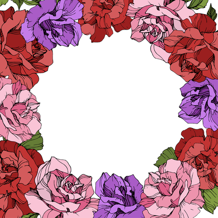 Vector Rose floral wreath on white background. Floral botanical flower. Red, purple and pink engraved ink art.