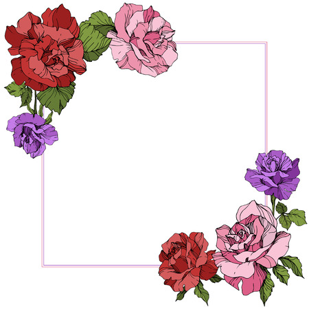 Vector Rose floral border square on white background. Floral botanical flower. Red, purple and pink engraved ink art. Illustration