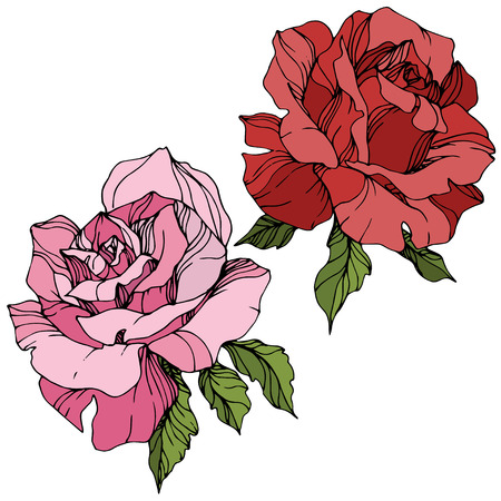 Vector Pink and red rose. Floral botanical flower. Green leaf. Isolated rose illustration element. Black and white engraved ink art. Archivio Fotografico - 117458969