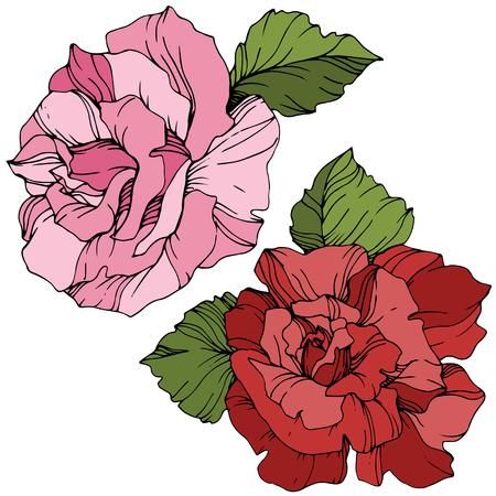 Vector Pink and red rose. Floral botanical flower. Green leaf. Isolated rose illustration element. Black and white engraved ink art. Çizim