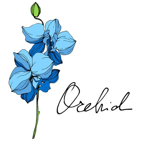 Vektor. Blaue orchidee. Botanische Blumenblume. Wilde Frühlingsblatt Wildblume isoliert. Blaue und grüne gravierte Tinte Art.-Nr. Lokalisiertes Orchideenillustrationselement auf weißem Hintergrund. Vektorgrafik