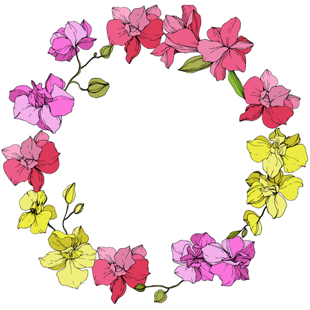 Vector Pink and yellow Orchid. Floral botanical flower. Engraved ink art. Frame floral wreath on white background.