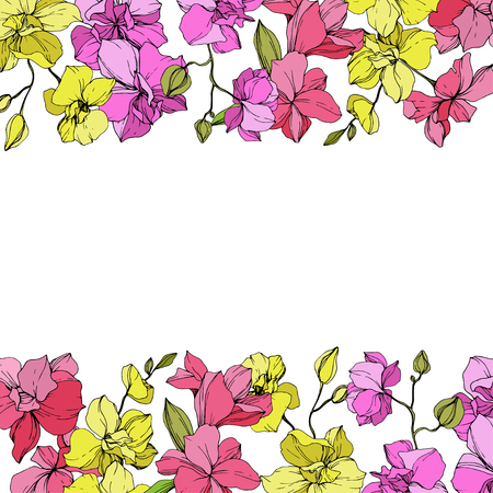 Vector Pink and yellow Orchid. Floral botanical flower. Engraved ink art. Floral border on white background. Illustration