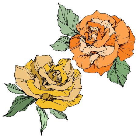 Vector Yellow and orange rose. Floral botanical flowers. Green leaf. Isolated rose illustration element. Black and white engraved ink art. Illustration