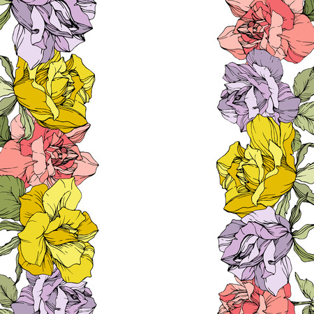 Vector Rose floral border on white background. Floral botanical flower. Yellow, purple and pink engraved ink art. Stock Illustratie