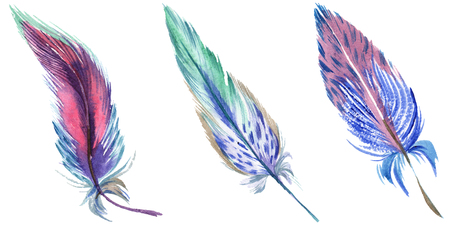 Colorful feathers. Watercolor bird feather from wing isolated. Aquarelle feather for background, texture, wrapper pattern, frame or border. Isolated feather illustration element. Stock Photo