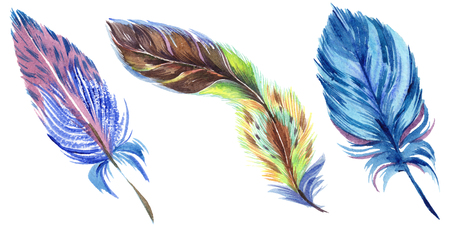 Colorful feathers. Watercolor bird feather from wing isolated. Aquarelle feather for background, texture, wrapper pattern, frame or border. Isolated feather illustration element. 写真素材 - 117440709