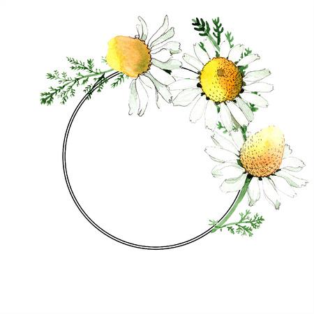 Fiore botanico floreale di camomilla. Wildflower foglia primavera selvaggia isolato. Insieme dell'illustrazione della priorità bassa dell'acquerello. Aquarelle di moda disegno ad acquerello isolato. Cornice bordo ornamento quadrato. Archivio Fotografico