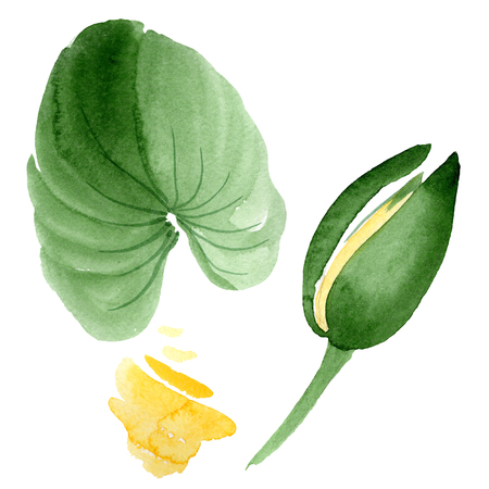 Yellow lotus. Floral botanical flower. Wild spring leaf wildflower isolated. Watercolor background illustration set. Watercolour drawing fashion aquarelle isolated. Isolated lotus illustration element