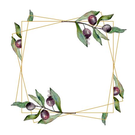 Schwarze Oliven Aquarell Hintergrund Illustration Set. Aquarellzeichnung Mode Aquarell isoliert. Grünes Blatt. Blattpflanze botanischer Garten florales Laub. Rahmenverzierungsquadrat.