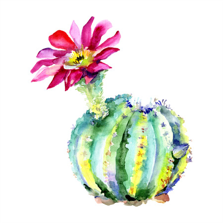 Green cactus. Floral botanical flower. Wild spring leaf wildflower isolated. Watercolour drawing fashion aquarelle isolated. Isolated cacti illustration element. Stock fotó - 117443546
