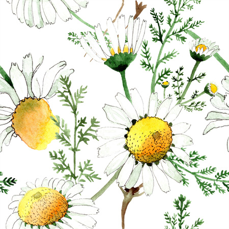 Chamomile floral botanical flower. Wild spring leaf isolated. Watercolor illustration set. Watercolour drawing fashion aquarelle. Seamless background pattern. Fabric wallpaper print texture. Stock Photo