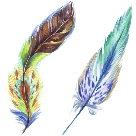 Colorful feathers. Watercolor bird feather from wing isolated. Aquarelle feather for background, texture, wrapper pattern, frame or border. Isolated feather illustration element. Фото со стока