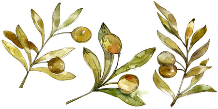 Green olives watercolor background illustration set. Watercolour drawing fashion aquarelle isolated. Green leaf. Leaf plant botanical garden floral foliage. Isolated olives illustration element.