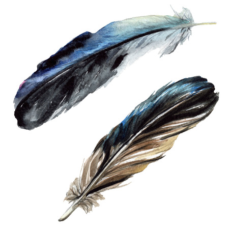 Black feather watercolour drawing. Watercolor bird feather from wing. Aquarelle feather for background, texture, wrapper pattern, frame or border. Isolated feather illustration element. 写真素材