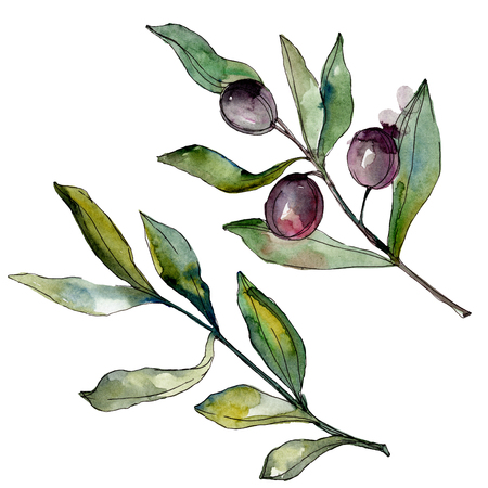Black olives watercolor background illustration set. Watercolour drawing fashion aquarelle. Isolated olives illustration element. Banco de Imagens