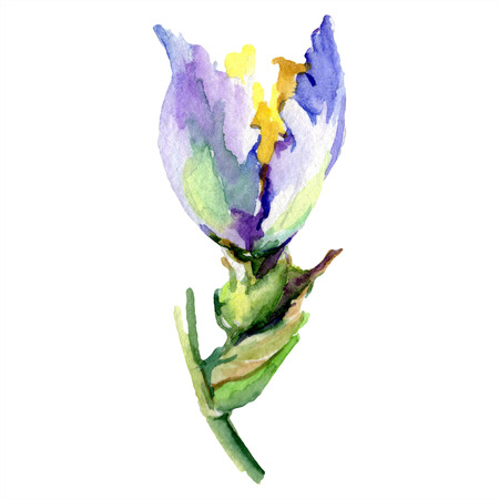 Purple yellow iris. Floral botanical flower. Wild spring leaf wildflower isolated. Watercolor background illustration set. Watercolour drawing fashion aquarelle isolated. Reklamní fotografie