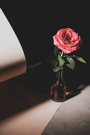 pink rose flower in glass bottle on stone table with sheets of paper isolated on black Imagens