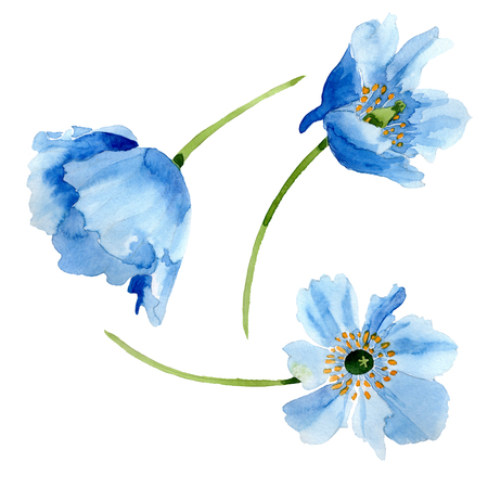 Blue Poppy. Floral botanical flower. Wild spring leaf wildflower isolated. Watercolor background illustration set. Watercolour drawing fashion aquarelle isolated. Isolated poppy illustration element.