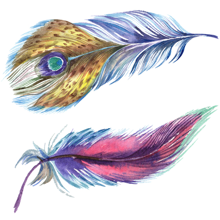 Colorful feathers. Watercolor bird feather from wing isolated. Aquarelle feather for background, texture, wrapper pattern, frame or border. Isolated feather illustration element. 版權商用圖片