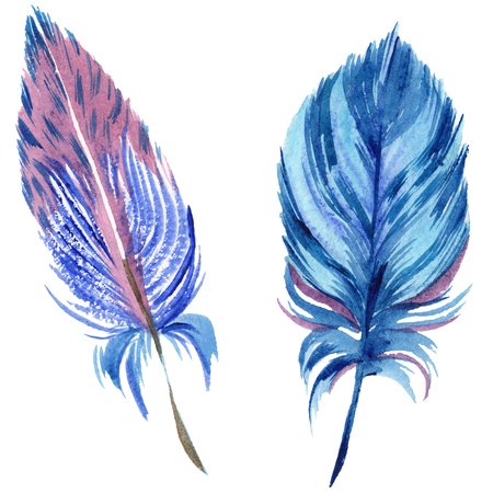 Colorful feathers. Watercolor bird feather from wing isolated. Aquarelle feather for background, texture, wrapper pattern, frame or border. Isolated feather illustration element. Stok Fotoğraf