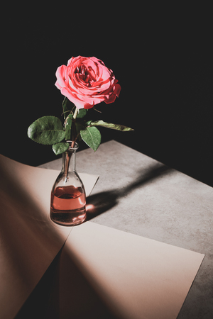pink rose flower in glass bottle on stone table with sheets of paper isolated on black Banco de Imagens