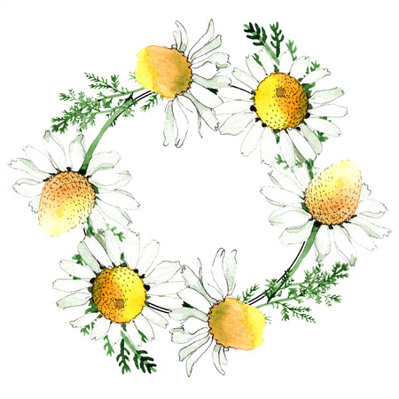 Chamomile floral botanical flower. Wild spring leaf wildflower isolated. Watercolor background illustration set. Watercolour drawing fashion aquarelle isolated. Frame border ornament square. Stock Photo