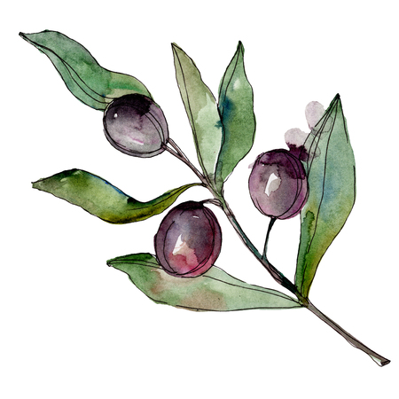Black olives watercolor background illustration set. Watercolour drawing fashion aquarelle. Isolated olives illustration element. Stock Photo