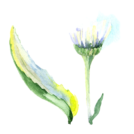 Daisy floral botanical flower. Wild spring leaf wildflower isolated. Watercolor background illustration set. Watercolour drawing fashion aquarelle isolated. Isolated daisy illustration element. Stok Fotoğraf