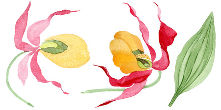 Cypredium calceolus. Floral botanical flower. Wild spring leaf wildflower isolated. Watercolor background illustration set. Watercolour drawing fashion aquarelle. Isolated orchid illustration element. Stock Photo