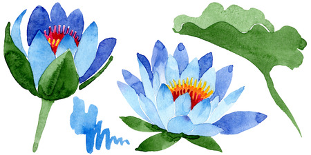 Blue lotus. Floral botanical flower. Wild spring leaf wildflower isolated. Watercolor background illustration set. Watercolour drawing fashion aquarelle isolated. Isolated lotus illustration element.