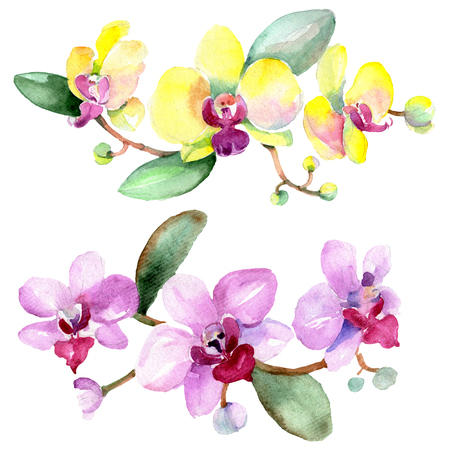 Orchid Floral botanical flower. Wild spring leaf wildflower isolated. Watercolor background illustration set. Watercolour drawing fashion aquarelle isolated. Isolated orchid illustration element.