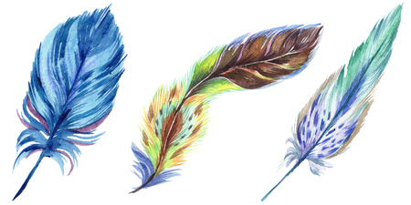 Colorful feathers. Watercolor bird feather from wing isolated. Aquarelle feather for background, texture, wrapper pattern, frame or border. Isolated feather illustration element. 写真素材