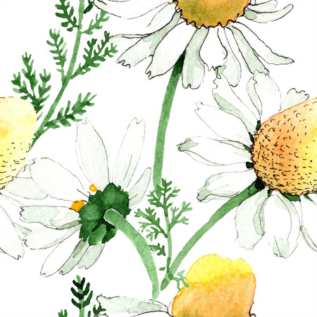 Chamomile floral botanical flower. Wild spring leaf isolated. Watercolor illustration set. Watercolour drawing fashion aquarelle. Seamless background pattern. Fabric wallpaper print texture. Фото со стока