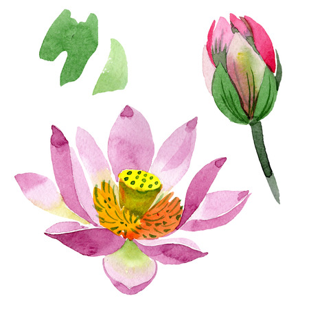 Purple lotus. Floral botanical flower. Wild spring leaf wildflower isolated. Watercolor background illustration set. Watercolour drawing fashion aquarelle isolated. Isolated lotus illustration element