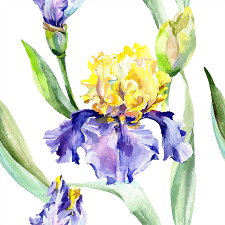 Purple yellow iris. Floral botanical flower. Wild spring leaf wildflower isolated. Watercolor background illustration set. Watercolour drawing fashion aquarelle isolated. Stok Fotoğraf
