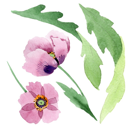 Burgundy poppy. Floral botanical flower. Wild spring leaf isolated. Watercolor background illustration set. Watercolour drawing fashion aquarelle isolated. Isolated poppy illustration element.