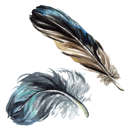 Black feather watercolour drawing. Watercolor bird feather from wing. Aquarelle feather for background, texture, wrapper pattern, frame or border. Isolated feather illustration element. Stock Photo
