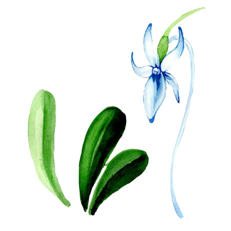 Blue Rare orchid. Floral botanical flower. Wild spring leaf wildflower. Watercolor background illustration set. Watercolour drawing fashion aquarelle isolated. Isolated orchid illustration element.